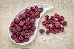 Freeze dried cherries Stock Image