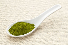 Freeze-dried organic wheat grass powder Stock Image