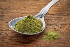 Freeze-dried organic wheat grass powder Royalty Free Stock Image