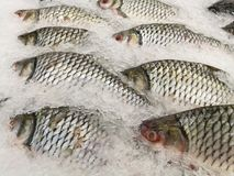 Freeze Fish meat product on shelf in the store. Pile of fish on ice. Fresh seafood - fish on ice. Freeze Fish meat product on shelf in the store. Pile of fish royalty free stock images