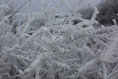 freeze6 Stock Image