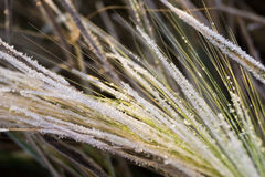 Freeze grass Stock Images