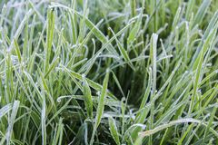 Freeze on grass with small drop, macro photo.  royalty free stock photos
