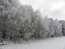 Freezed skönhet på kall vintermorgon arkivbilder