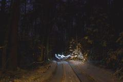 Freezelight在夜森林里 免版税库存照片