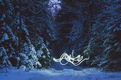 Freezelight in het nachtbos Stock Afbeeldingen