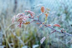 Freezing branch. Royalty Free Stock Images