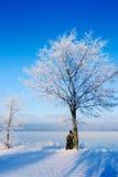 Freezing Coast Stock Photo