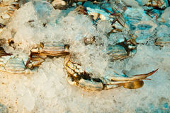 Freezing crab Stock Photography
