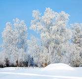 The Freezing day Royalty Free Stock Images