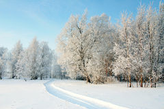The Freezing day Royalty Free Stock Photo