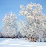 Freezing day Royalty Free Stock Photo