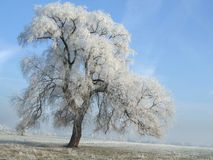 The Freezing day. Solitary tree on a sunny freezing day stock images
