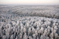 Freezing day in forest Stock Image