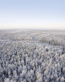 Freezing day in forest Royalty Free Stock Image
