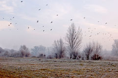 Freezing day in Lower Silesia Royalty Free Stock Photography