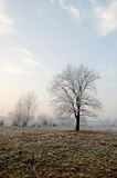 Freezing day in Lower Silesia Royalty Free Stock Image