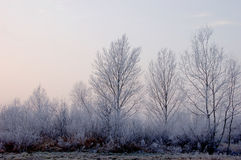 Freezing day in Lower Silesia Stock Images