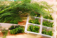 Freezing the dill for winter Stock Image