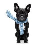 Freezing dog Stock Images