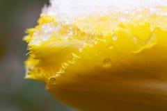 The freezing flower Royalty Free Stock Image