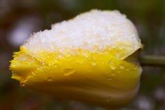 The freezing flower Stock Photo
