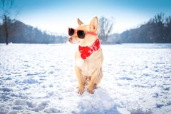 Freezing icy dog in snow Royalty Free Stock Photo