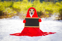 Freezing icy dog in snow. Jack russell dog, outside freezing and shivering with a red blanket , winter snow and cold , holding a banner or placard royalty free stock image