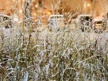 Freezing night royalty free stock image