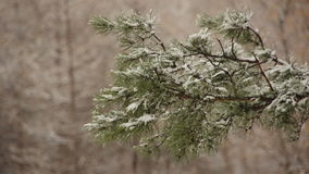 Freezing, pole, breadth, trip, coniferous. Winter beauty of forms charms magic of the weather phenomenon stock video footage