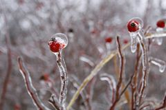 Freezing rain aftermath. stock photos