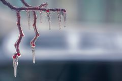 Freezing rain on the branches. Close view Royalty Free Stock Images