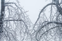 Freezing rain covered the trees and surface in a park forest Royalty Free Stock Photo