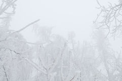Freezing rain covered the trees and surface in a park forest Royalty Free Stock Photography