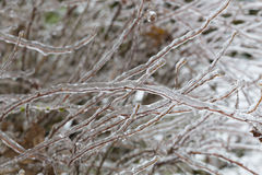 Freezing Rain Ice Storm Coats Plants Royalty Free Stock Photo