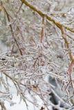 Freezing Rain Ice Storm Coats Plants Stock Photography