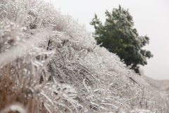 Freezing Rain. Icicles frozen bushes after a winter storm Royalty Free Stock Photos