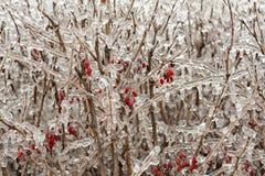 After freezing rain. Stock Photos