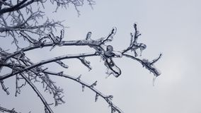 Freezing rain on tree branch showing number five royalty free stock images