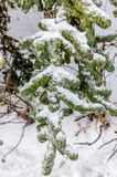 Freezing rain Stock Images