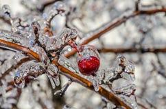 Freezing rain Royalty Free Stock Image