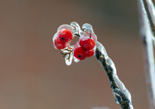 Freezing rain Stock Image