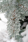 Freezing rain Royalty Free Stock Image