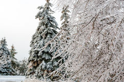 Freezing rain Royalty Free Stock Photo