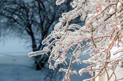 Freezing rain Royalty Free Stock Images