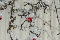Freezing rain Stock Images