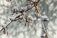 Freezing rain Stock Photo