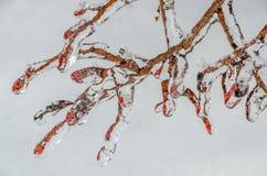 Freezing rain Stock Image