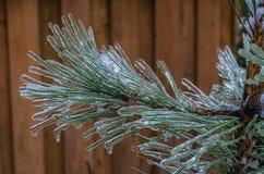 Freezing rain Royalty Free Stock Photography