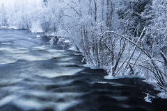 Freezing rapids. Winter rapids in Finnish forest Royalty Free Stock Photos